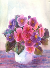 Violas Flowers