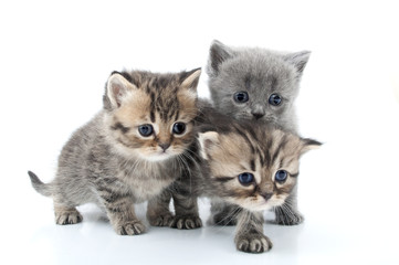 isolated portrait of  kittens walking together