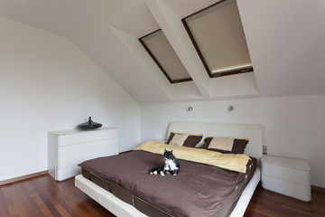 Cat on the bed - modern bedroom