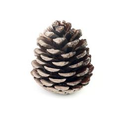One dark cone