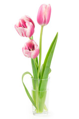 Three pink tulips in a vase