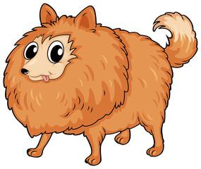 A hairy dog