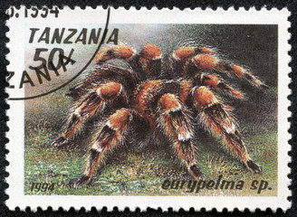 stamp printed in Tanzania shows image of a eurypelma sp