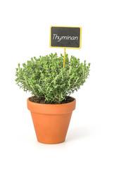 Thymian im Tontopf mit Pflanzenstecker