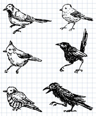 drawn birds
