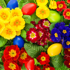 primula flowers with colorful easter eggs decoration