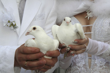 wedding;lovers after the wedding, keep pigeons,to set them loose