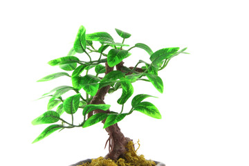 Artifical Bonsai tree over white