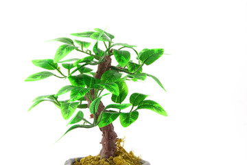 Artifical Bonsai tree