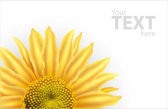 Vector background with large flower of sunflower