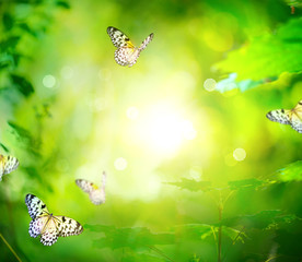 Beautiful Nature Spring Green Background With Butterfly