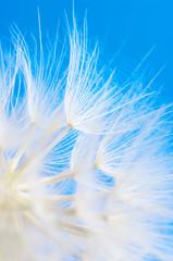 Fotorolgordijn Paardebloemen en water Dandelion close-up