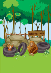 Orangutans at the zoo