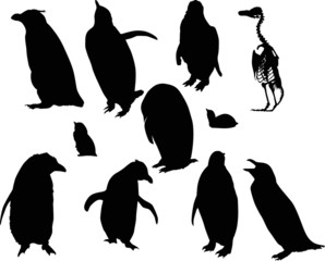 penguin silhouettes set isolated on white