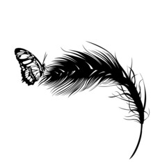 butterfly on a feather