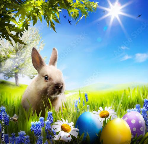 солнечный кролик скачать