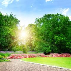 Aluminium Prints Green sunrise in beautiful summer park
