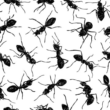 pattern with ants