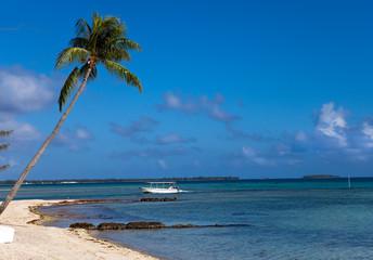 Sandy coast of the dark blue sea with a palm tree