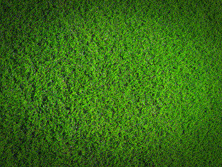 grass nature texture background