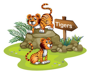 Two tigers with a wooden arrow board