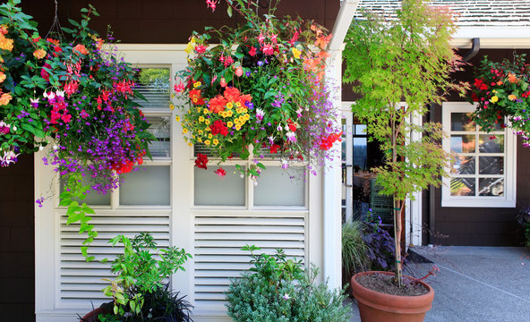 Flowers in the hanging baskets with white windows