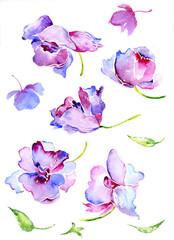 Watercolor spring flowers