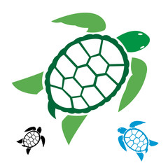 Vector image of an turtle on white background