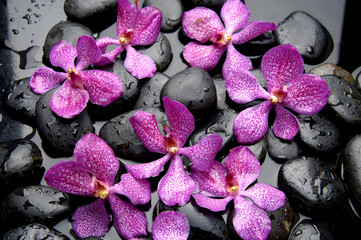 set of pink orchid with stone water drops