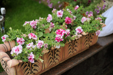 Flowerbed in Blossom