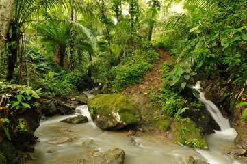Wild Darien jungle