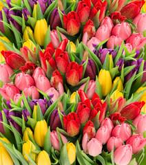 Wiosenne kwiaty tulipanów z kroplami wody