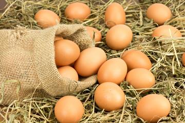 Jajka w worku na sianie