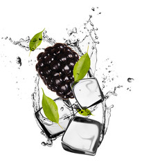 Acrylic Prints In the ice Blackberry with ice cubes, isolated on white background