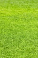 spring grass background, focus on foreground