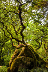 Forest in the park of Pena National Palace. Sintra, Portugal