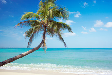 Palm on sea