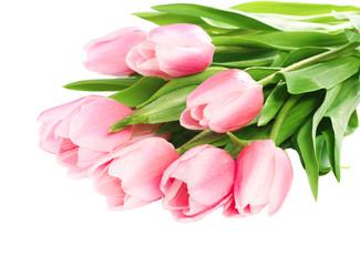 Fresh spring tulip  flowers on white