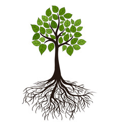 tree with roots and dense foliage, vector image