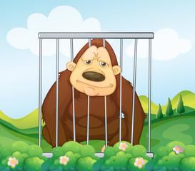 A gorilla in a cage