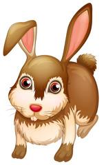 A big brown bunny