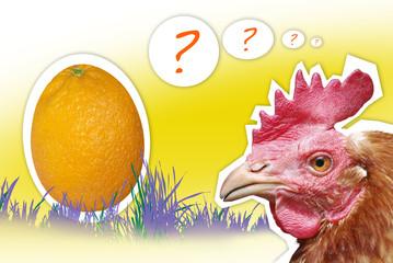 orangeegg chicken