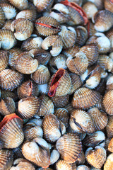 Sea shells clams in Thailand