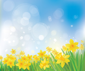 Vector of daffodil flowers on spring background.