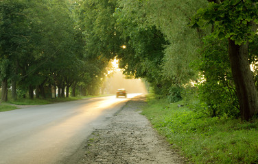 Sunlight on road