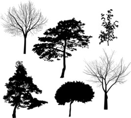 six black tree silhouettes isolated on white