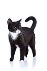 Black-and-white cat.