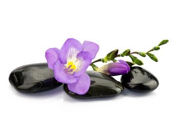 Obraz Frezja na kamieniach do masażu - fototapety do salonu