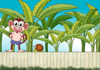 A monkey and a snail above the fence