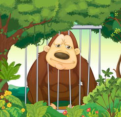 A gorilla inside a cage at the forest